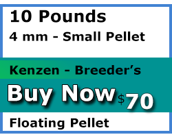 kenzen buy 10 pounds 4mm floating Breeder's Choice koi food