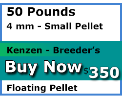 kenzen buy 50 pounds 4mm floating Breeder's Choice koi food